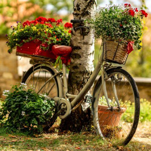 bike-3683405_1920
